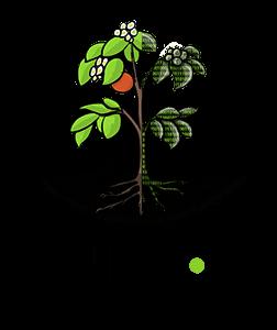 plant-data-npec-252x300