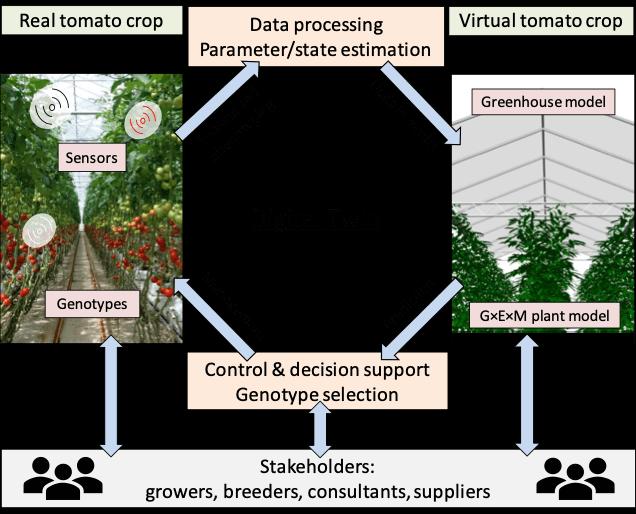 virtual-tomato-crops